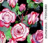 wildflower hybrid rose flower...   Shutterstock . vector #793041880