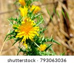 Yellow Flowers On Spiny Stem....