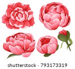 peony vector clip art set of 5... | Shutterstock .eps vector #793173319