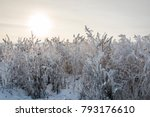frosted grass in cold winter day | Shutterstock . vector #793176610