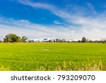 rice field and mill  landscape... | Shutterstock . vector #793209070