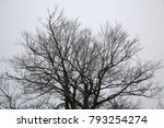 lonely tree in cloudy silent... | Shutterstock . vector #793254274