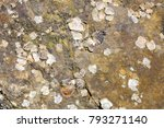 Small photo of Shells are adsorbed on rocks
