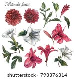 flowers set of watercolor... | Shutterstock . vector #793376314