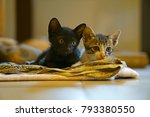 Stock photo  cute kittens everything about kittens a kitten also known as a kitty 793380550
