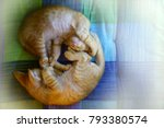 Stock photo  cute kittens everything about kittens a kitten also known as a kitty 793380574