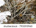 Driftwood On The Winter Beach