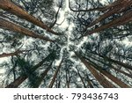 cedars trees forest  beautiful... | Shutterstock . vector #793436743