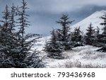 cedar mountains in winter ... | Shutterstock . vector #793436968