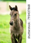 Small photo of Foal, Canadian Foal