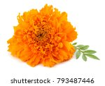 Orange Marigold Flower  Tagete...