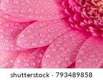 pink gerbera flower blossom... | Shutterstock . vector #793489858