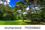 green natural garden in the... | Shutterstock . vector #793508860