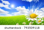 wild daisies in the green field ... | Shutterstock . vector #793509118