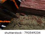 vanessa atalanta  red admiral... | Shutterstock . vector #793549234