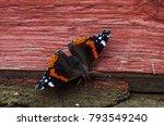 vanessa atalanta  red admiral... | Shutterstock . vector #793549240