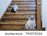Two Cats Sit Down On Stairs...