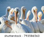 Large Group Of American White...