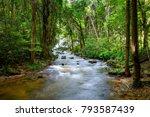 cascade falls over mossy trunk...   Shutterstock . vector #793587439