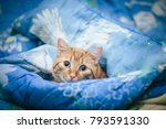 Stock photo ginger cat on the bed 793591330