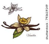 vanilla spice herb sketch icon. ...   Shutterstock .eps vector #793619149