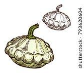 pattypan squash sketch icon....   Shutterstock .eps vector #793620604