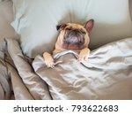 Cute Pug Dog Sleep On Pillow In ...