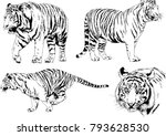 vector drawings sketches... | Shutterstock .eps vector #793628530
