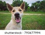dog on a green grass outdoors | Shutterstock . vector #793677994