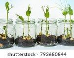 gmo plants in biological... | Shutterstock . vector #793680844