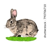 bunny sitting on the grass... | Shutterstock .eps vector #793706710