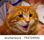 maine coon red cat laughing.... | Shutterstock . vector #793724944