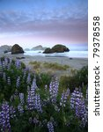 Lupine And Sea Stacks Along The ...
