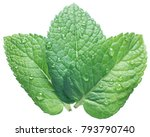 three spearmint or mint leaves... | Shutterstock . vector #793790740