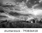 foggy morning shiny summer... | Shutterstock . vector #793836418