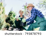 senior man and woman planting a ... | Shutterstock . vector #793878793