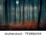 evening autumn moment | Shutterstock . vector #793886434