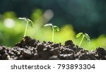green plant growing with... | Shutterstock . vector #793893304