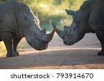 Two Black Rhinos Having A Fight