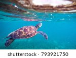 sea turtle in water | Shutterstock . vector #793921750
