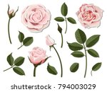 a set of flower parts.... | Shutterstock .eps vector #794003029