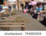 chameleons to sell on arabic... | Shutterstock . vector #794003554