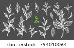 realistic nature set of... | Shutterstock .eps vector #794010064