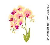 branches orchid phalaenopsis... | Shutterstock .eps vector #794038780