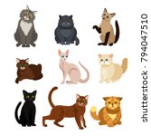 Vector Illustrations Of Cat...