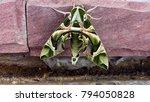 oleander hawk moth or daphnis... | Shutterstock . vector #794050828