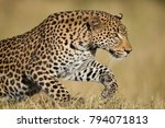a horizontal  colour photograph ... | Shutterstock . vector #794071813