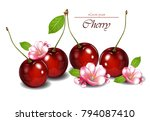 cherry fruits with flowers... | Shutterstock .eps vector #794087410