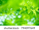 Nature Of Green Leaf In Garden...