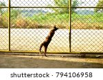 Small photo of a Cat with the door or wall made by metal net entrance to out side free world, abstract concept.